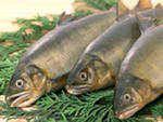 Рыба свежемороженая