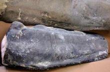 Зубатка  синяя Мурманск от 16 кг