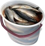 Сельдь слабой соли  тушка 400 гр Ведро 5 кг Спб Норд