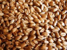 Пшеница Россия от 1 кг