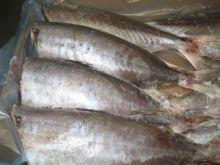 Саворин (тунец) без головы тушка  1000 - 1500 гр Новая Зеландия от 5 кг